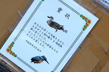 2011.07.15 和泉川 掲示板 カルガモママへ表彰状