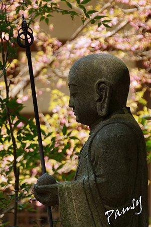 桜の傍らに・・円覚寺・・4