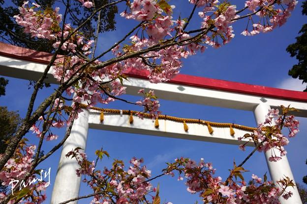 写真: 鎌倉宮の鳥居と・・