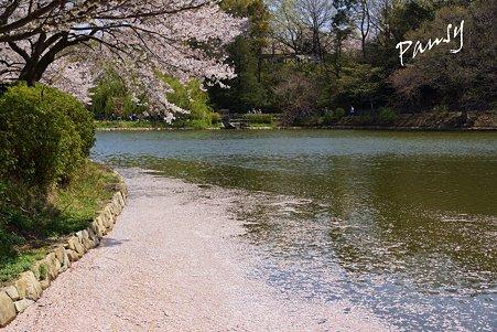花筏・・三ッ池公園の桜 20
