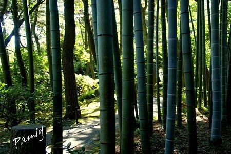 竹林の径・・夏の三渓園内苑・・12