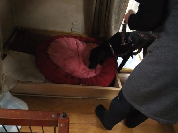 Photos: リリィのベッドやで