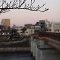 さくらと鶴見橋