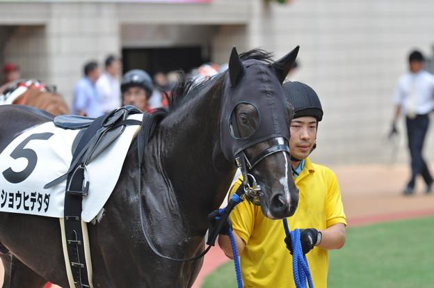 秀忠(Meisho Hidetada)