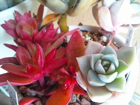紅葉まつり 白牡丹