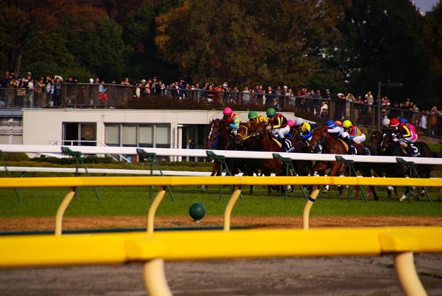2011.11.27東京競馬場9R