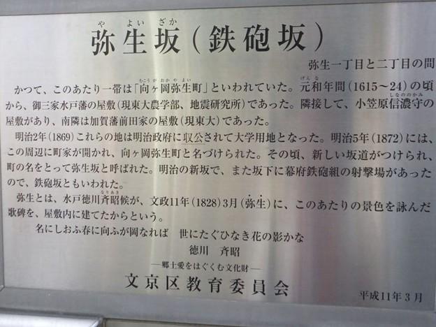 弥生坂説明6