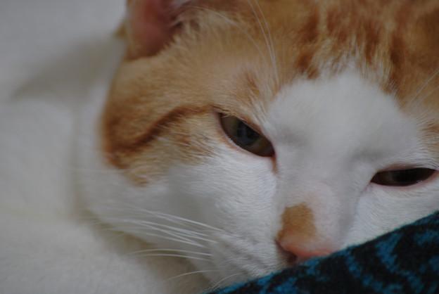 眠い眠い - 写真共有サイト「フォト蔵」