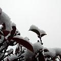 写真: 今朝は雪