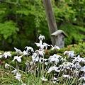 2012-04-25 ニコン・鎌倉・長谷寺・大仏・江ノ電 274