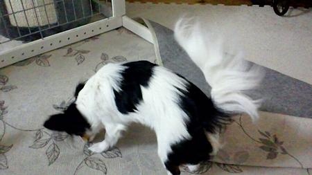 霙の飾り毛(尻尾)1