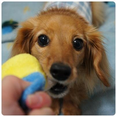 20120323 おもちゃ遊び♪