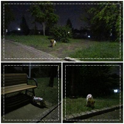 20110809 お散歩