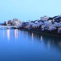 浅野川と満開のソメイヨシノ