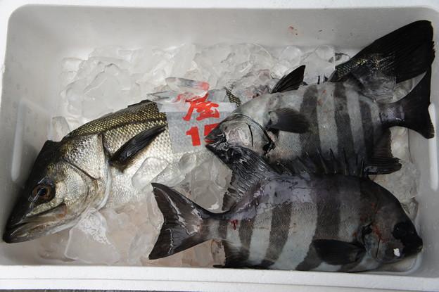 今朝入った魚