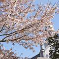 Photos: 散る桜07