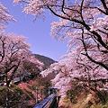 Photos: 小田急MSEあさぎりになって初めての山北の桜トンネル走行
