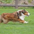 写真: 美男子 走る