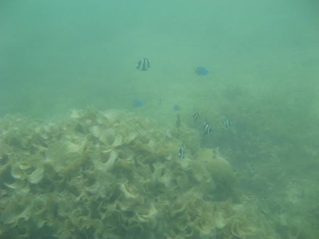 Photos: 相方撮影の熱帯魚07