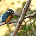2011年鳥撮り