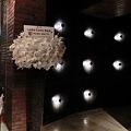 Photos: 2011.12.15 Laika Came Back!ジョージ・ウィリアムズさんからのお祝い花