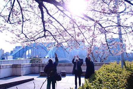 永代橋の大寒桜 2012  06