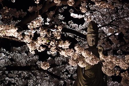 本誓寺の夜桜 03